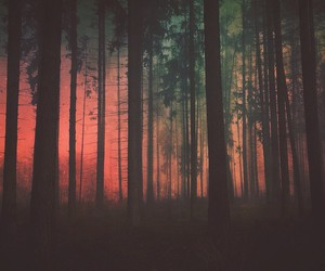 tree, forest, and grunge image