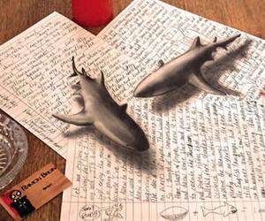 drawing and shark image