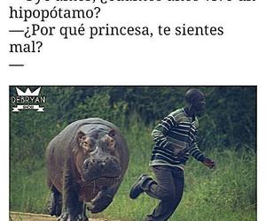 funny, hipopotamo, and mujeres image