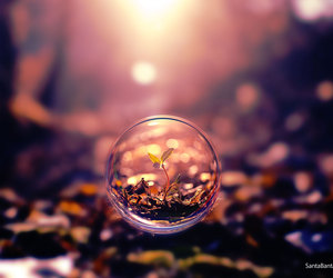 nature, bubbles, and plants image