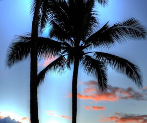 palm tree, ios, and iphone 6 image