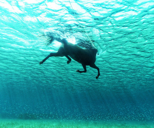 horse, water, and sea image