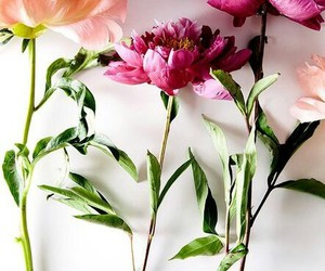 beauty, flowers, and gift image