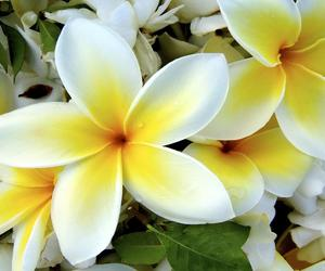 flowers, yellow, and white image