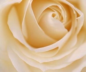 bouquet, boutique, and delicate image