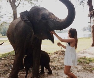 elephant, girl, and animal image