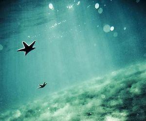 sea, ocean, and starfish image