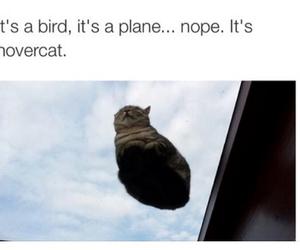 bird, car, and cat image