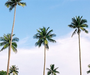 summer, beach, and palms image