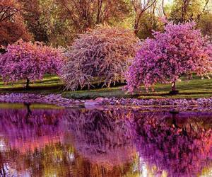 tree, spring, and nature image