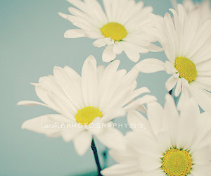 daisies, flowers, and nature image