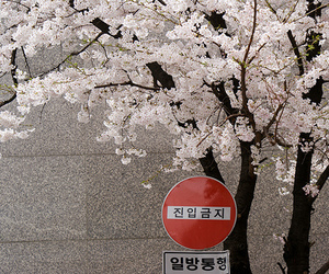 beautiful, japan, and pink image