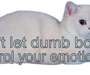 cat, boy, and emotions image