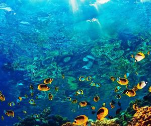 fish, ocean, and water image