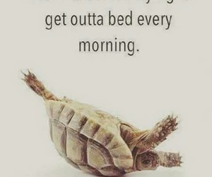 morning, funny, and turtle image