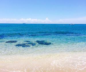 beach, hawaii, and palmtree image
