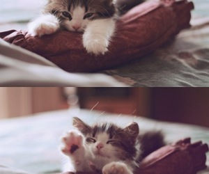 bed, cute, and cat image
