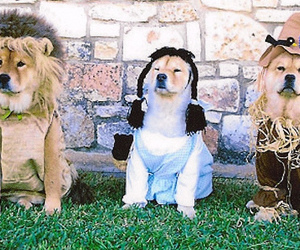 costumes, dorothy, and lion image