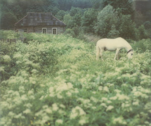 dark, horse, and vintage image