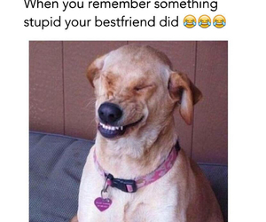 funny, dog, and friends image
