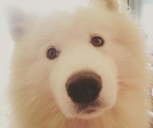 animals, dog, and friend image