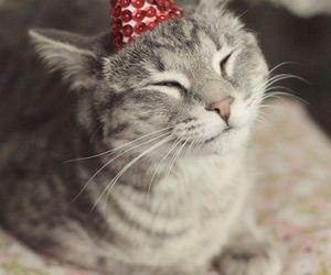 cat, adorable, and hat image