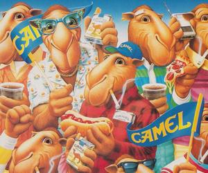 camel image