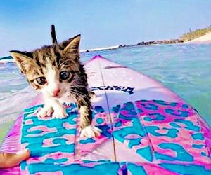 beach, cat, and pink image