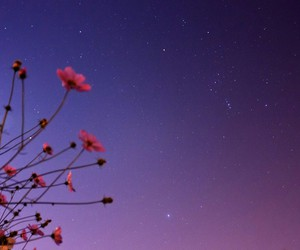 flowers, night, and sky image