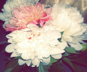 flowers and pions image