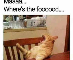 food, funny, and cat image