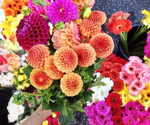 flowers, bright, and indie image