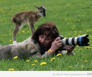 animals, baby wolf, and so damn cute image