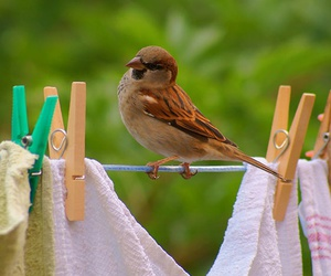 bird, nature, and sparrow image