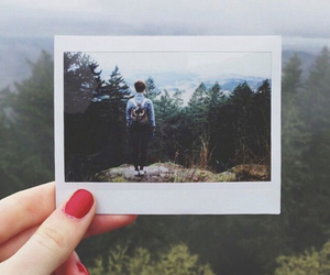 forest, photography, and picture image