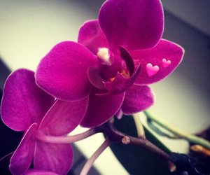 flower, orchid, and girly image