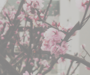 pink, flowers, and header image