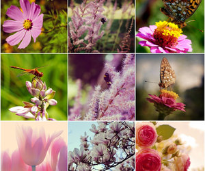 botanical, flower photography, and butterfly image