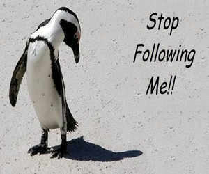 following and penguin image