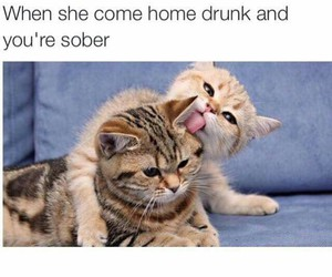 cat, drunk, and funny image