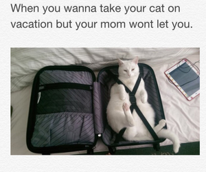 lol, relatable, and cat image