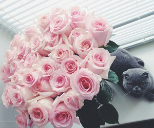 flowers, cat, and rose image