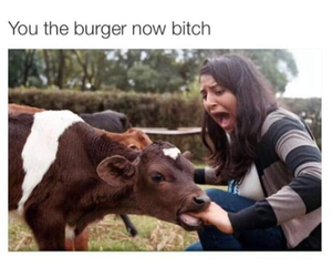 funny, cow, and lol image