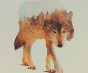 wolf, animal, and art image