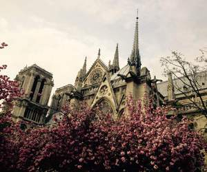 architecture, flowers, and Notre Dame de Paris image