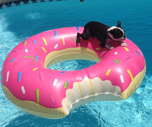 dog, summer, and donut image