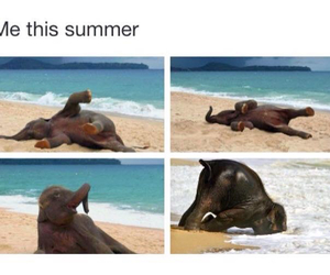 elephant, me, and summer image