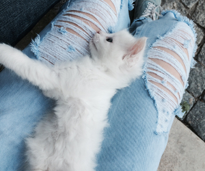 animals, cats, and jeans image