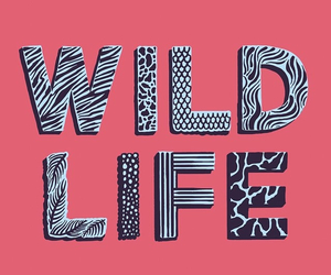 pink, life, and wild image