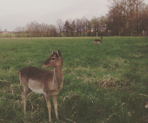 animals, fallow deer, and forest image